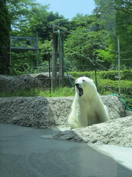 とくしま動物園ポロロ (7)