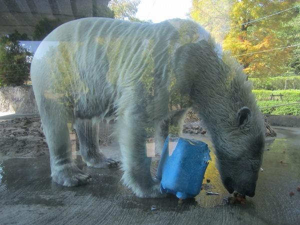 とくしま動物園ポロロ (2)