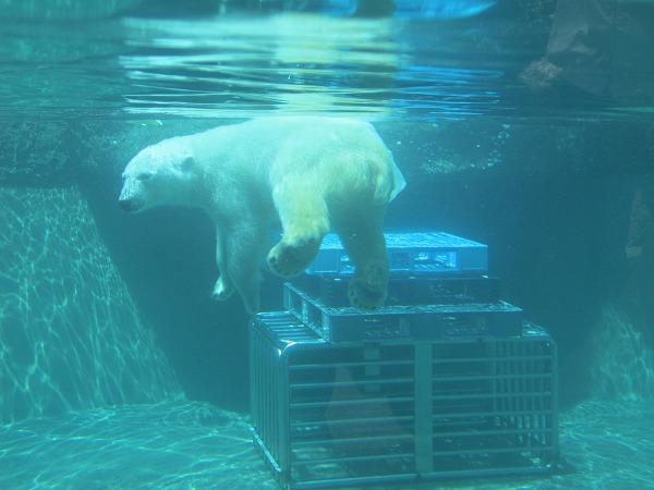 とくしま動物園ポロロ (15)
