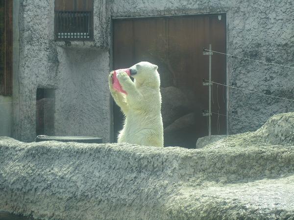 とくしま動物園ポロロ (18)