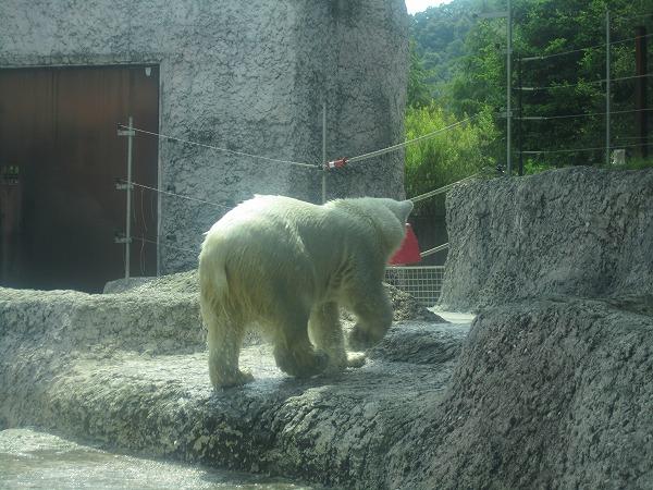 とくしま動物園ポロロ (16)