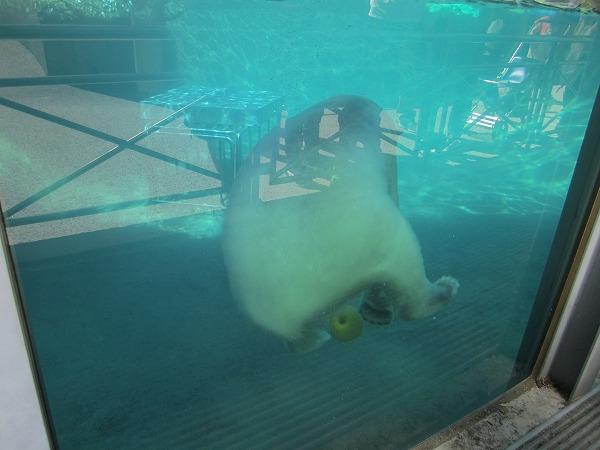 とくしま動物園ポロロ (3)