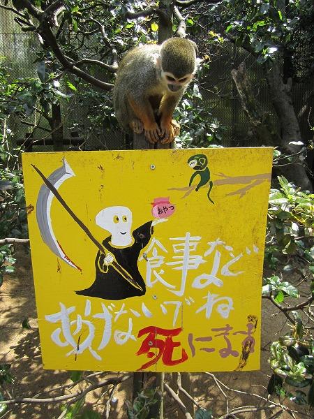 とくしま動物園サル (8)
