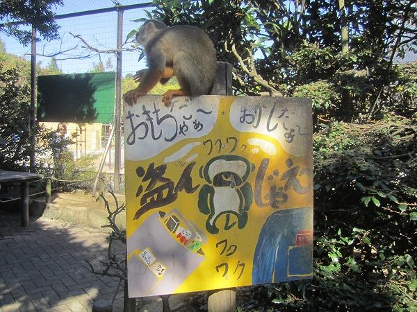とくしま動物園サル (2)