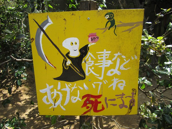 とくしま動物園サル (6)
