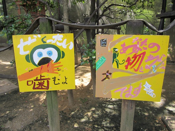 とくしま動物園サル (9)