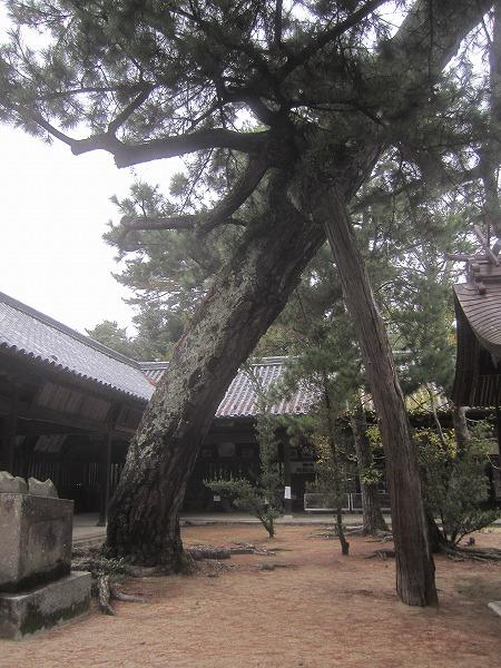 白鳥神社 (24)
