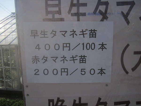 石田高校ねぎ (6)
