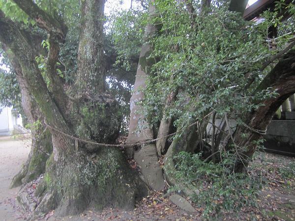 白鳥神社 (42)