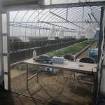 【香川】地元農家も買う!さぬき市『石田高校』のタマネギの苗が安くて良質!