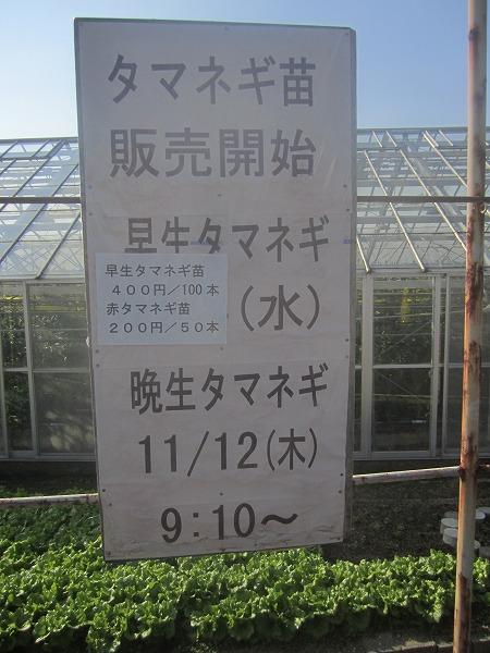 石田高校ねぎ (5)