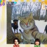 自撮りネコこと『セルフィーキャット』が可愛いとネットで話題になってるのだが。。。