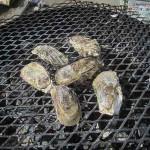 【香川】さぬき市で毎年開催!グルメの祭典『冬のうまいもんまつり』でカキを食べたら。。。