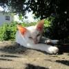 【香川】みんな大好き。女木島のニャンとも可愛いニャンコなネコ写真だよ!