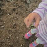 【香川】さぬき市鴨部の海に潮干狩りに行ったらミドリガメが捕れた!カオス