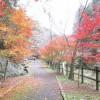 【香川】塩江温泉郷の観光スポット『不動の滝』の紅葉がステキ!
